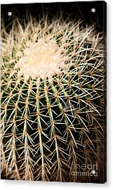 Acrylic Print featuring the photograph Single Cactus Ball by John Wadleigh
