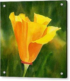 Single California Poppy Acrylic Print by Sharon Freeman