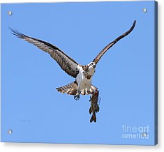 Acrylic Print featuring the photograph Single Handed by Heather King