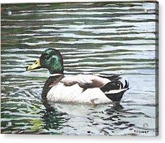 Single Mallard Duck In Water Acrylic Print by Martin Davey