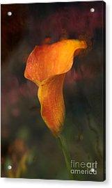 Single Orange Cala Acrylic Print by Jennifer Apffel