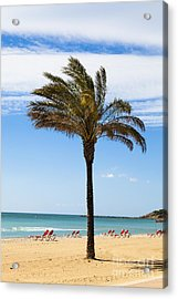 Single Palm Tree On Beach With Unoccupied Sun Loungers Acrylic Print