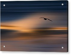 Acrylic Print featuring the photograph Single Pelican  73a1102 by David Orias