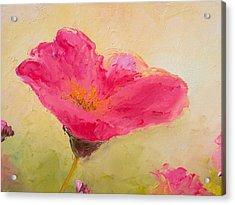 Single Pink Poppy Acrylic Print