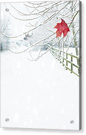 Single Red Leaf Acrylic Print by Amanda Elwell