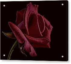 Single Red Rose Of Love Acrylic Print