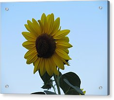 Acrylic Print featuring the photograph Single Sunflower And The Bees by Tina M Wenger