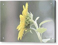 Single Sunflower Acrylic Print by Leone Lund