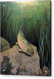 Single Trout Acrylic Print