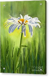 Single White Daisy  Acrylic Print