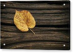 Single Yellow Birch Leaf Acrylic Print by Scott Norris