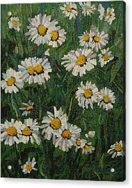 Singleton Daisies Acrylic Print