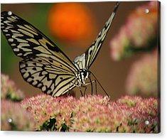 Sip Of The Nectar Acrylic Print by Randy Hall