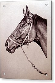 Sir Alfred 2 Acrylic Print by Patricia Howitt
