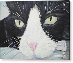 Sissi The Cat 2 Acrylic Print