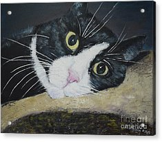 Sissi The Cat 3 Acrylic Print