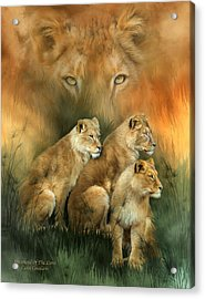 Sisterhood Of The Lions Acrylic Print by Carol Cavalaris