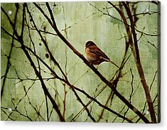Sittin' In A Tree Acrylic Print by Rebecca Cozart