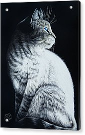 Sitting Cat Acrylic Print