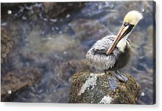 Sitting On A Rock In The Bay Acrylic Print