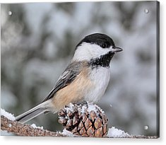 Sitting On A Snow Cone Acrylic Print