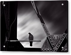 Sitting On A Stick Acrylic Print by Bob Orsillo