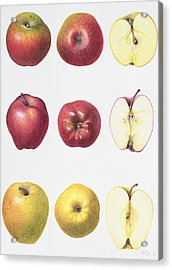 Six Apples Acrylic Print by Margaret Ann Eden