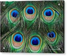 Six Eyes Acrylic Print