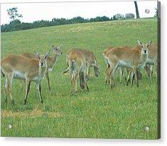 Six Flags Great Adventure - Animal Park - 121242 Acrylic Print by DC Photographer