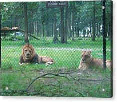 Six Flags Great Adventure - Animal Park - 121253 Acrylic Print by DC Photographer