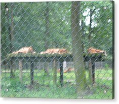 Six Flags Great Adventure - Animal Park - 121254 Acrylic Print by DC Photographer