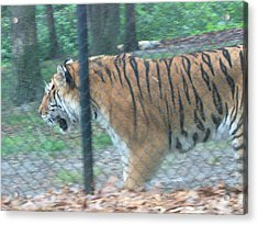Six Flags Great Adventure - Animal Park - 121278 Acrylic Print by DC Photographer