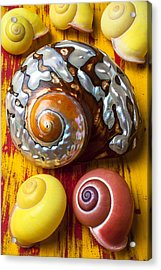 Six Snails Shells Acrylic Print by Garry Gay