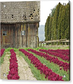 Skagit Valley Acrylic Print by Kjirsten Collier