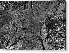 Skeletal Sky Acrylic Print