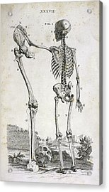 Skeleton And Giant's Leg Acrylic Print