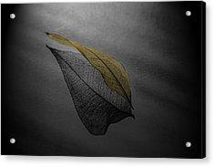 Skeleton Leaf 4716 Acrylic Print