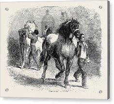 Sketch From The Horse Fair Acrylic Print