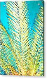 Sketchy Palm Fronds Acrylic Print by Jeanne Forsythe