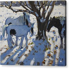 Skewbald Ponies In Winter Acrylic Print by Andrew Macara