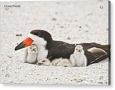 Skimmer Family Cuddle Acrylic Print