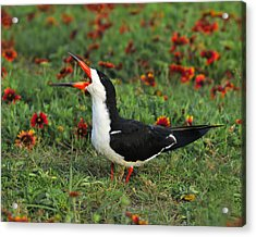 Skimming Through The Garden Acrylic Print by Tony Beck