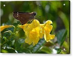 Acrylic Print featuring the photograph Skipper Butterfly 2 by Debra Martz