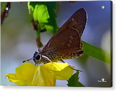 Acrylic Print featuring the photograph Skipper Butterfly by Debra Martz