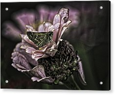 Skipper On Flower Acrylic Print
