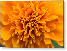 Skunk Flower Orange Acrylic Print
