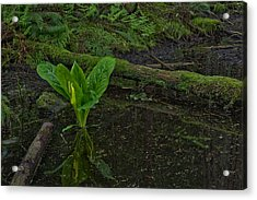 Skunk Weed Cabbage In The Pond Acrylic Print by Paul W Sharpe Aka Wizard of Wonders