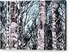 Skutskar 005 Acrylic Print by Per Lidvall