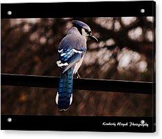 Sky Blue Wings Acrylic Print