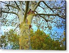 Sky High Acrylic Print by Kathy Barney